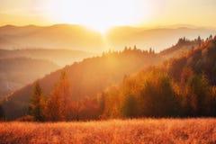 bosque del abedul por tarde soleada mientras que estación del otoño Fotos de archivo libres de regalías