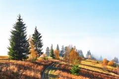 bosque del abedul por tarde soleada mientras que estación del otoño Autumn Landscape ucrania Imagen de archivo libre de regalías