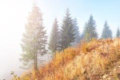 bosque del abedul por tarde soleada mientras que estación del otoño Autumn Landscape ucrania Imagen de archivo
