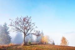 bosque del abedul por tarde soleada mientras que estación del otoño Autumn Landscape ucrania Imagenes de archivo