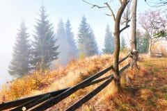 bosque del abedul por tarde soleada mientras que estación del otoño Autumn Landscape ucrania Foto de archivo