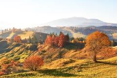 bosque del abedul por tarde soleada mientras que estación del otoño Autumn Landscape ucrania Fotografía de archivo