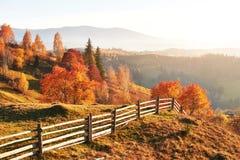 bosque del abedul por tarde soleada mientras que estación del otoño Autumn Landscape ucrania Fotografía de archivo libre de regalías