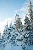 Bosque del abeto del invierno Imágenes de archivo libres de regalías
