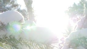 Bosque del abeto del invierno en la nieve en el sol almacen de video