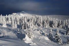 Bosque del abeto del invierno en montañas Foto de archivo