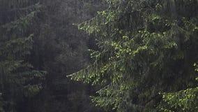 Bosque del abeto en niebla, nubes y lluvia almacen de metraje de vídeo