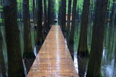 Bosque del agua de Wuzhong imágenes de archivo libres de regalías