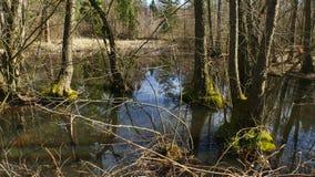 Bosque del agua que crece en el ?rea de la reserva de la UNESCO horizontal imagen de archivo