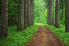 Bosque del alerce Imagenes de archivo