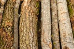 Bosque del ambiente, de la naturaleza y de la tala de árboles - tala de árboles El concepto de un problema global Fondo del árbol Fotos de archivo libres de regalías