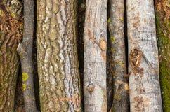 Bosque del ambiente, de la naturaleza y de la tala de árboles - tala de árboles El concepto de un problema global Fondo del árbol Foto de archivo