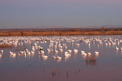 Bosque Del Apache National Wildlife Refuge Stock Photography