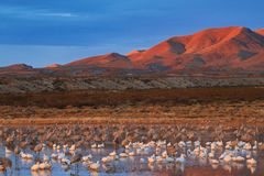 Bosque del Apache National Wildlife Refuge at Dawn royalty free stock photos