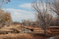 Bosque del Apache New Mexico, reflections of bare trees in irrigation canals, winter landscape. Horizontal aspect royalty free stock photo