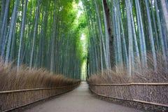 Bosque del bambú de Arashiyama Foto de archivo