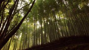 Bosque del bambú de Kyoto metrajes
