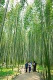 Bosque del bambú de la saga de Torokko Foto de archivo libre de regalías
