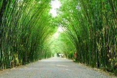 Bosque del bambú del cenador Fotos de archivo libres de regalías