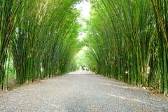 Bosque del bambú del cenador Fotografía de archivo