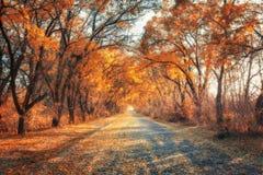 Bosque del bosque del otoño con la carretera nacional en la puesta del sol Fotografía de archivo libre de regalías