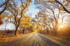 Bosque del bosque del otoño con la carretera nacional en la puesta del sol Imagenes de archivo