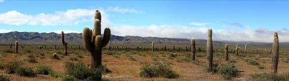 Bosque del cactus fotografía de archivo