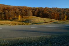Bosque del camino Imagen de archivo