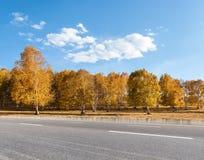 Bosque del camino y del abedul del otoño Fotos de archivo