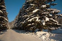Bosque del canal de la manera del invierno Foto de archivo libre de regalías