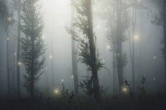 Bosque del cuento de hadas con la luz de hadas en bosque misterioso de la fantasía Fotos de archivo libres de regalías
