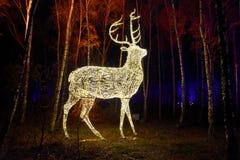 Bosque del cuento de hadas con los animales iluminados foto de archivo