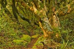 Bosque del duende foto de archivo