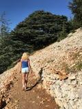 Bosque del edar del ¡de Ð Imagen de archivo