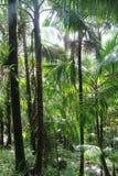 Bosque del EL Yunque Foto de archivo