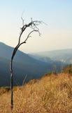 Bosque del Estado de Ángeles, colinas imagen de archivo