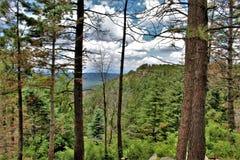 Bosque del Estado de Apache-Sitgreaves, Arizona, Estados Unidos fotos de archivo