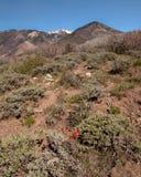 Bosque del Estado de la sal del Manti-La Imagen de archivo