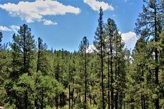 Bosque del Estado de Tonto, Arizona U S Ministerio de Agricultura, Estados Unidos imagen de archivo