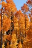 Bosque del Estado de Uinta Imagen de archivo libre de regalías