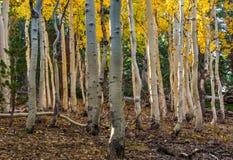 Bosque del Estado de Uinta Imagenes de archivo
