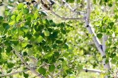 Bosque del Estado de Uinta Fotografía de archivo