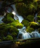 Bosque del Estado de Umpqua de la cala de Clearwater de la cascada del agua foto de archivo libre de regalías