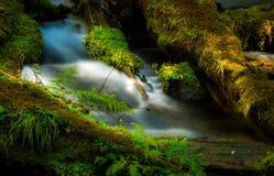 Bosque del Estado de Umpqua de la cala de Clearwater de la cascada del agua imágenes de archivo libres de regalías