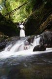 Bosque del Estado del EL Yunque Imágenes de archivo libres de regalías