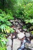 Bosque del Estado del EL Yunque Imagenes de archivo