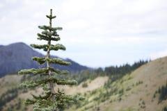 Bosque del Estado olímpico, Washington Imagenes de archivo