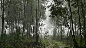 Bosque del eucalipto en Portugal Foto de archivo libre de regalías