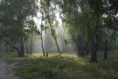 Bosque del Fairy-tale. imagenes de archivo