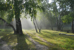 Bosque del Fairy-tale. Fotos de archivo libres de regalías